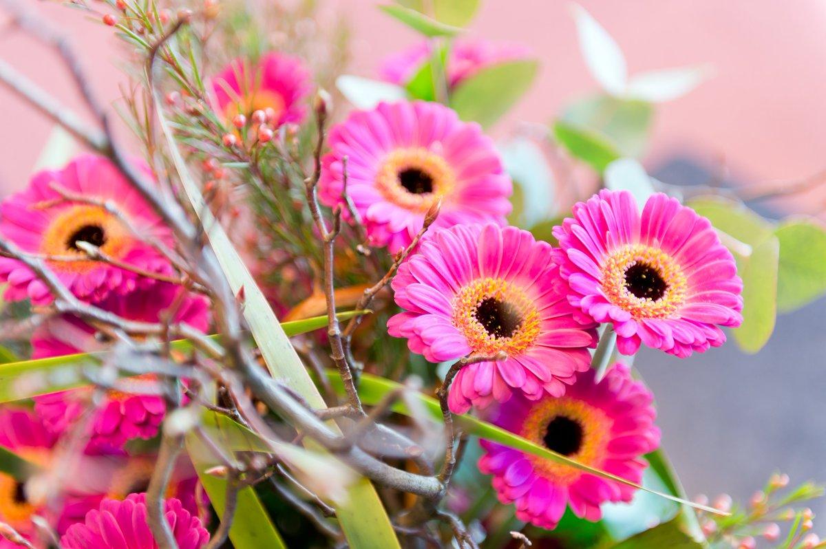 Ang Hookup Daan Images Of Flowers