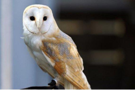 Scandale le centre de soins pour animaux sauvage,  Volée de Piafs va fermer  >> http://bit.ly/2lFUy4t  #Dégout #animauxsauvage pic.twitter.com/xflVQLH1dA