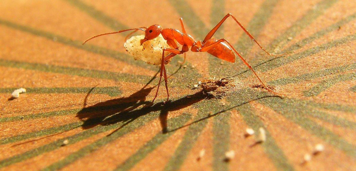 19/01 &gt; L'extraordinaire sens de l'orientation des fourmis  http:// bit.ly/2kODWul  &nbsp;   #CNRSLeJournal c/@CNRS #LaMethSci<br>http://pic.twitter.com/vyMeYzZH75
