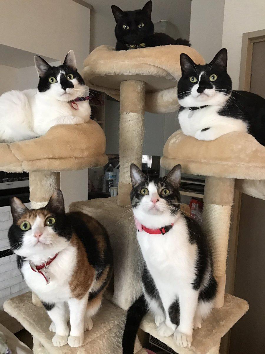 右下のぽぽろんが「おい!せっかく新しいキャットタワー買ったんだからみんなで写真撮るぞ!早く来い!」 …
