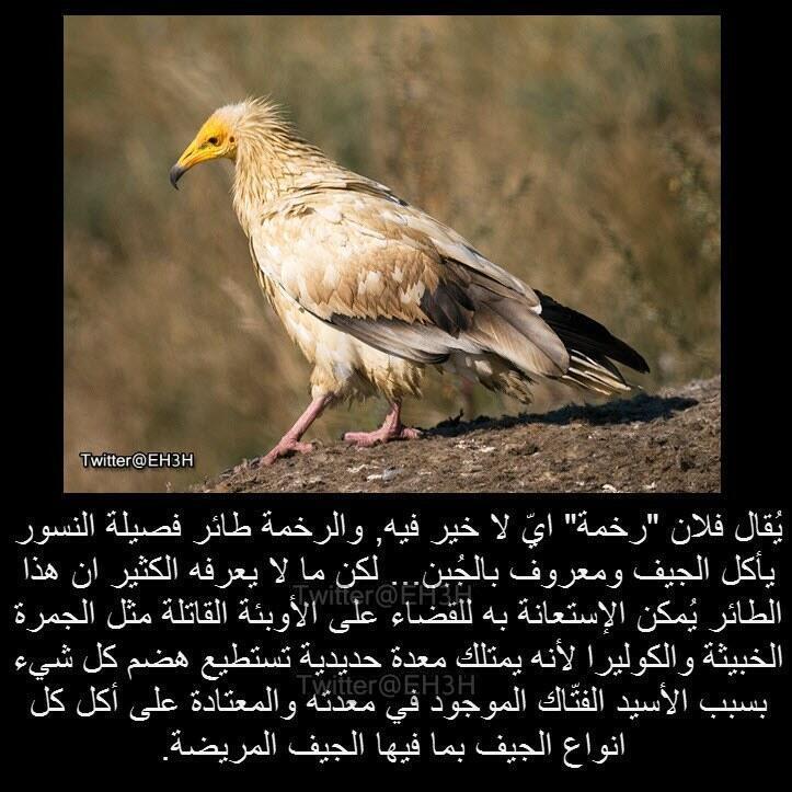 بوفادي عين السيح On Twitter هههههههههههههههه