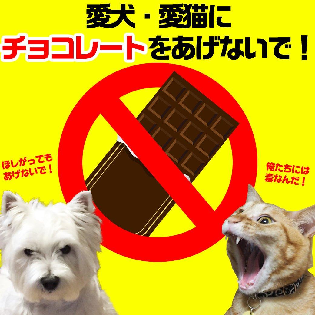 ▼チョコレートに注意▼ テーブルに置いてしまった! ポロっと落としてしまった! 気付いたら食べられてなくなっていた! など、愛犬愛猫が誤って食べてしまうと・・・ チョコレート中毒になる危険があります(>_<) 気をつけましょう!! https://t.co/148bzTkKzG
