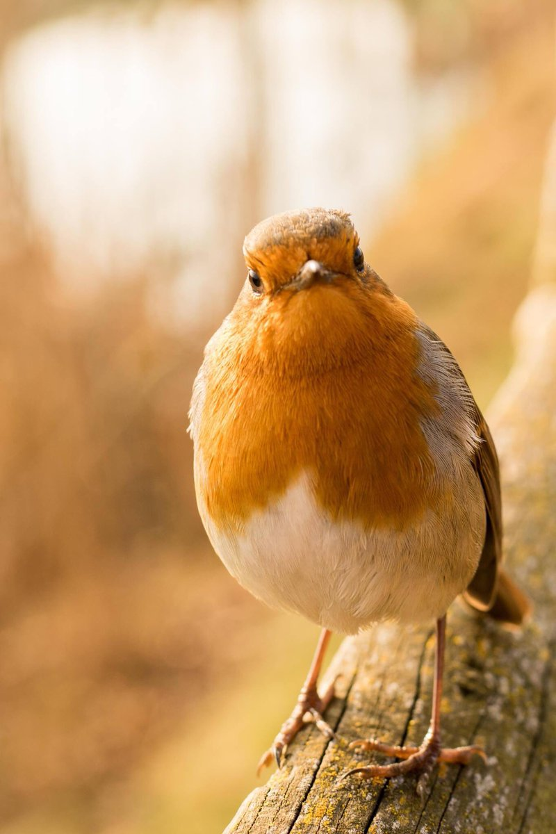 Next up, @carolchristine impresses with this image of an inquisitive little robin #WexMondays https://t.co/BNAt9v2g08