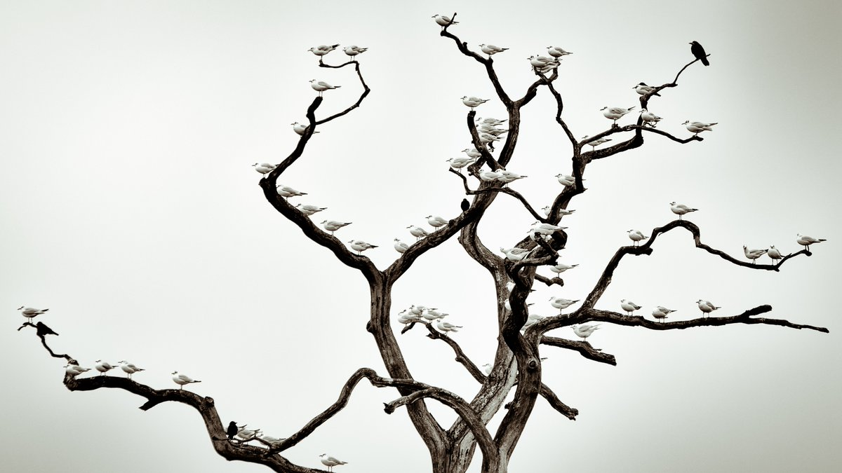 Everybody look left, everybody look right... some impressive avian synchronicity going on in @StuieJW's #WexMondays entry https://t.co/wAHXmFIEsB