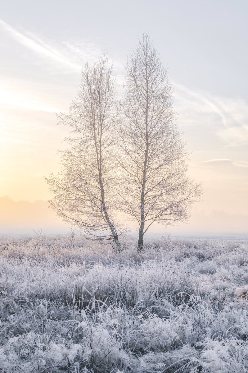 .@Vemsteroo returns to the #WexMondays shortlist with this stately image of frozen Sutton park https://t.co/Gzm2GOiwrg