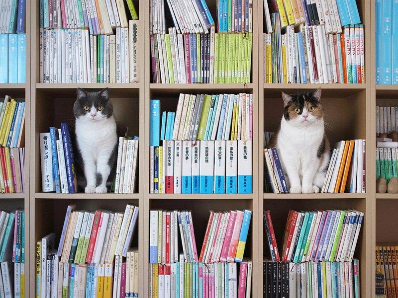 本棚を空けておくと猫が転送されてくる #本棚晒す