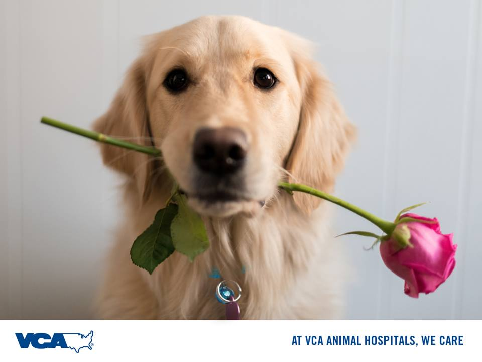 VCA Animal Hospitals on Twitter:
