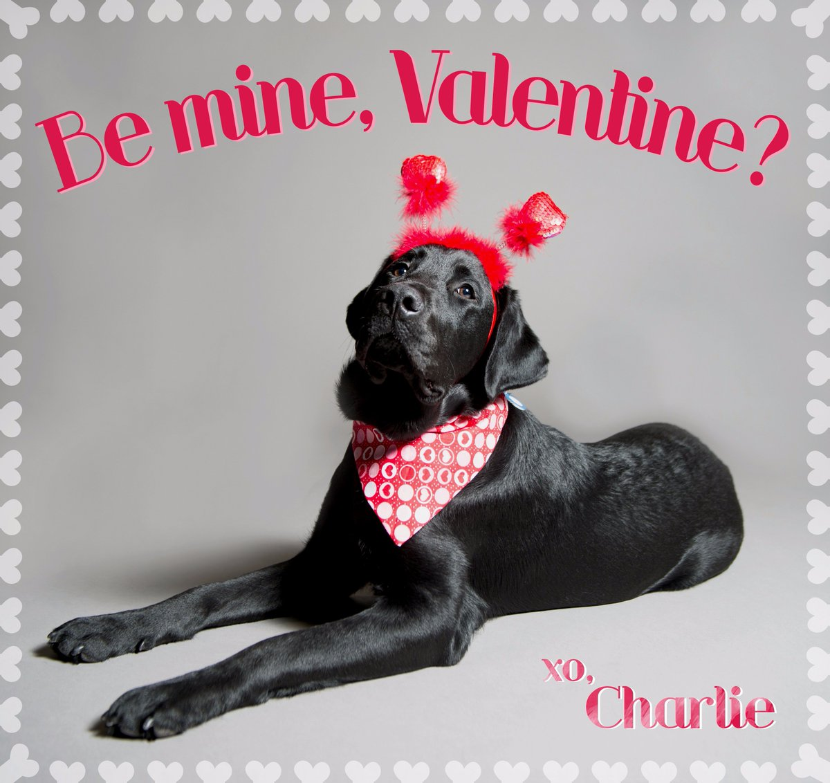 Celebrate #ValentinesDay with some good old fashioned puppy love! @TODAYPuppy