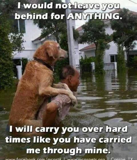 C4psV2JUMAEmCCW we love dogs, usa on twitter \