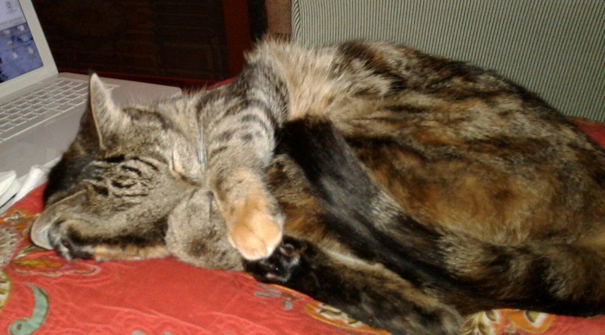 Tango hug leg