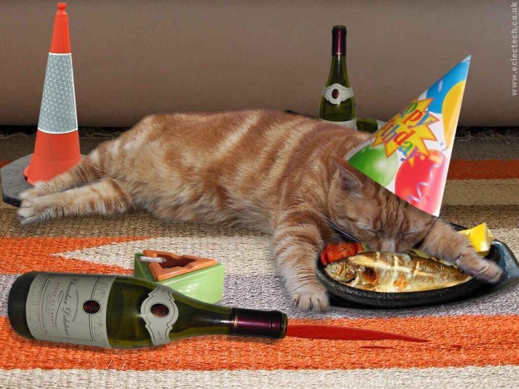 этом поздравления с днем рождения кота смешные поистине