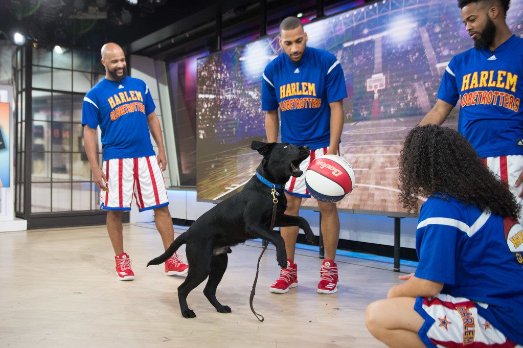 Having a ball with the @Globies! #TODAYPuppy