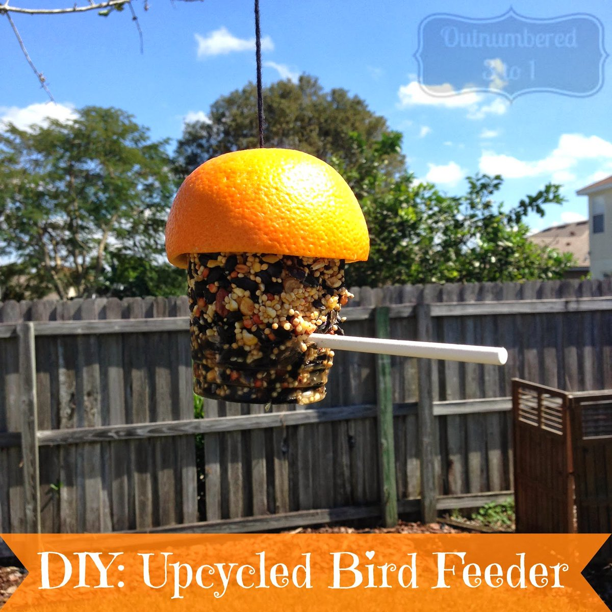 Learn how to make this cute bird feeder by upcycling things you'd toss out! https://t.co/DgMs7yXOwg https://t.co/DBCWXqhfGk