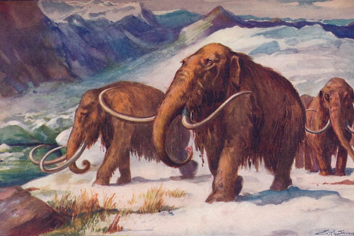 This scientist thinks bringing back the woolly mammoth from extinction could actually help curb climate change  https://t.co/nLXEt0Rv1X