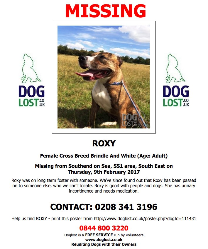 #LOST  ROXY  Female #crossbreed #Southendonsea #SS1 #lostdog #ScanMe  http://www. doglost.co.uk/dog-blog.php?d ogId=111431#.WKSJsxKLRMY &nbsp; … <br>http://pic.twitter.com/v1twY3pUQb
