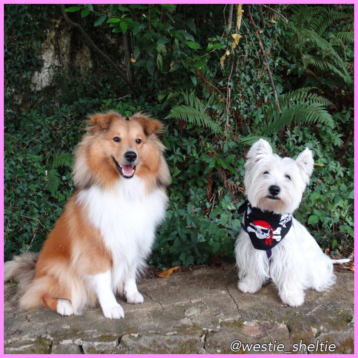 En Asturias, que recuerdos!! Cuando volvemos?! #asturias #vacaciones #shetland #westie #dogs #happy<br>http://pic.twitter.com/qdNyT8rkIs