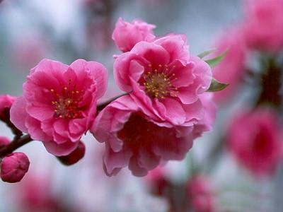 Spring is coming ;-) #wednesdaymotivation <br>http://pic.twitter.com/RhJDFJiplA