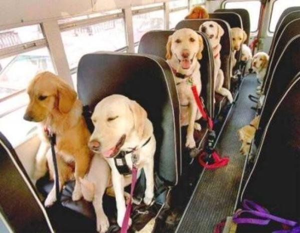 I WANT TO GO TO WHEREVER THIS BUS IS GOING