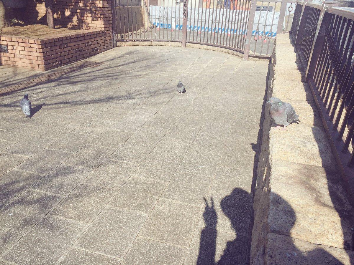 気持ちよく日向ぼっこしてたら、鳩が集まってきた。お前たちも日向ぼっこかい?