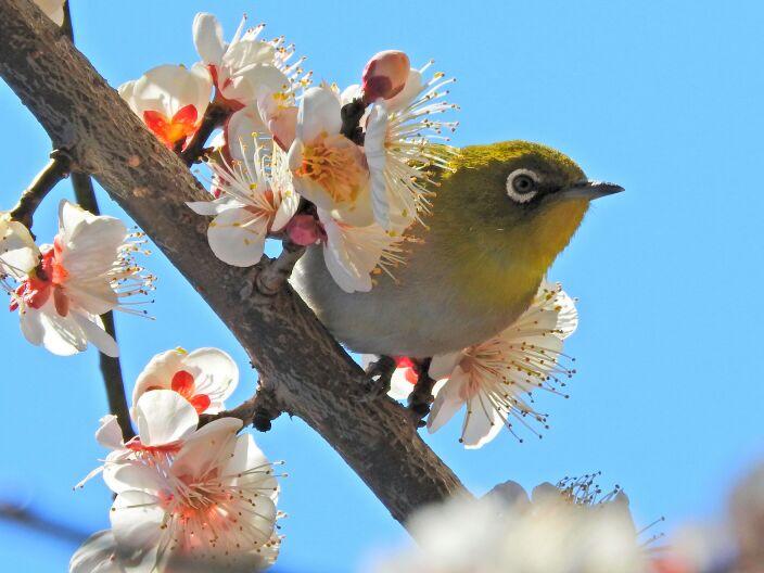 【今日の天気】早くも桜が咲く頃の暖かさ!その分、花粉の飛散や急激な雪どけに注意が必要です。 weat…
