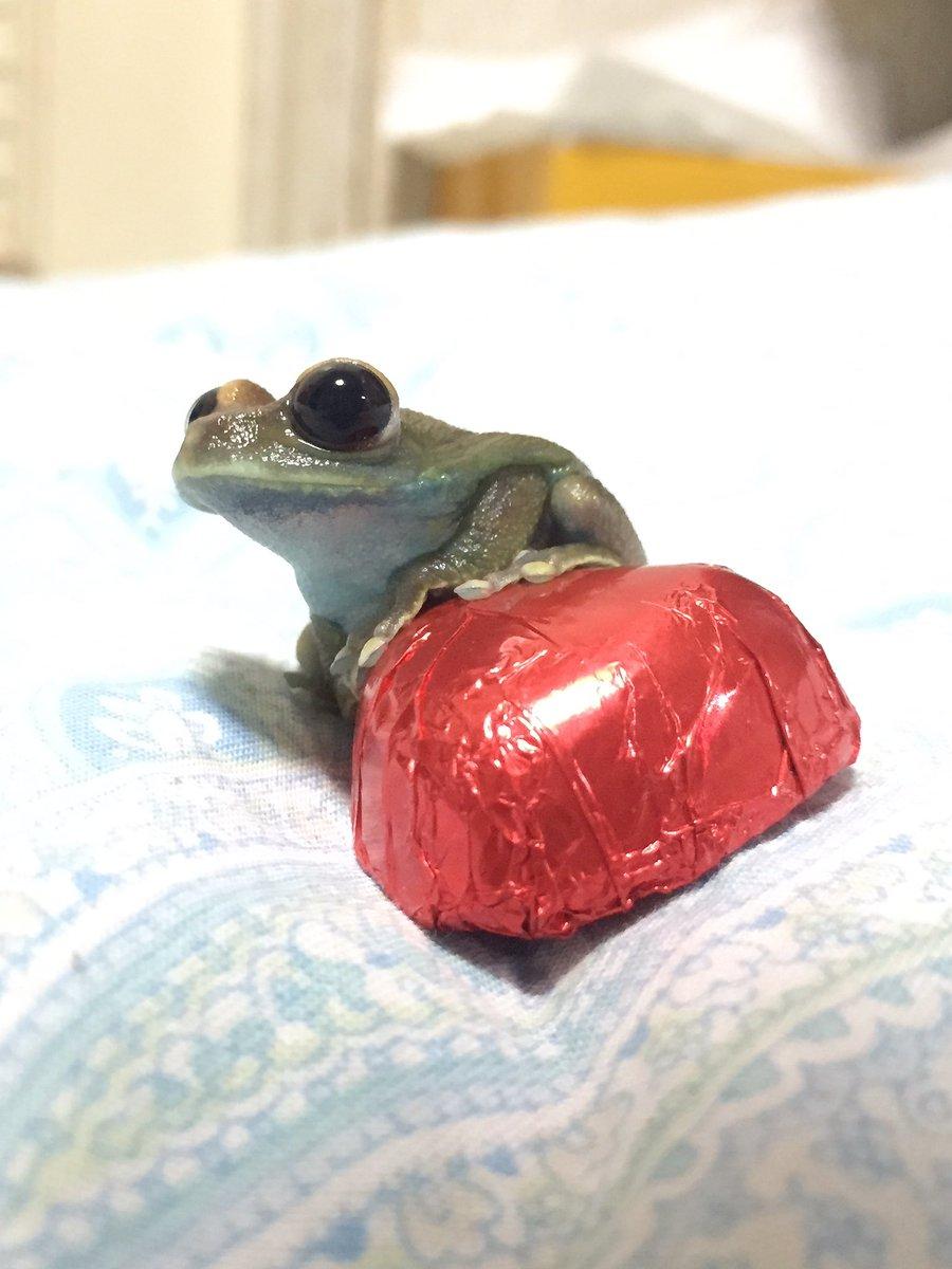 チョコ・・・・・・、いるケロ?