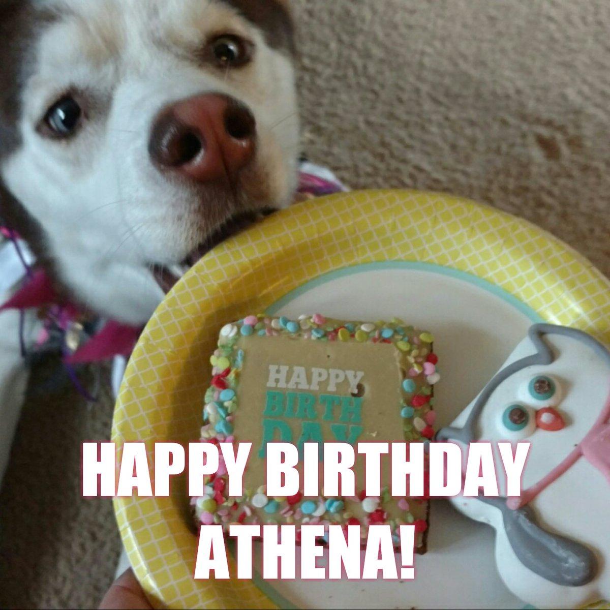 Petco On Twitter Happy Birthday Athena