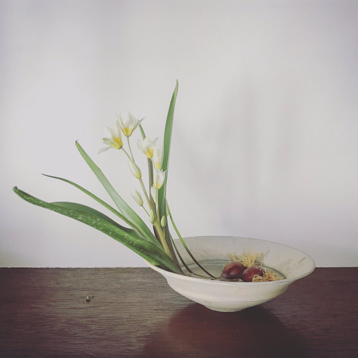 おはようございます。 チューリップの原種。 佇まいが気に入ってます。 https://t.co/sKOww15jTC