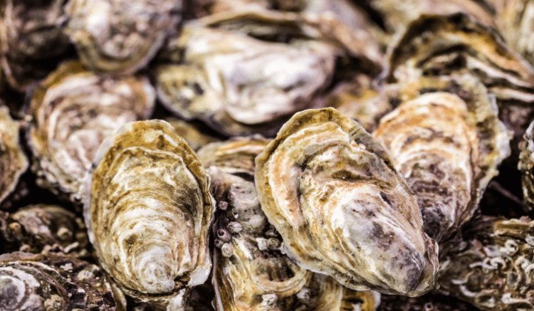 An interesting look at how #IoT will change #agriculture industries w/ an example from Australian #Oyster #farming > https://t.co/MqyIimZQ3X https://t.co/EHgvWABpQk