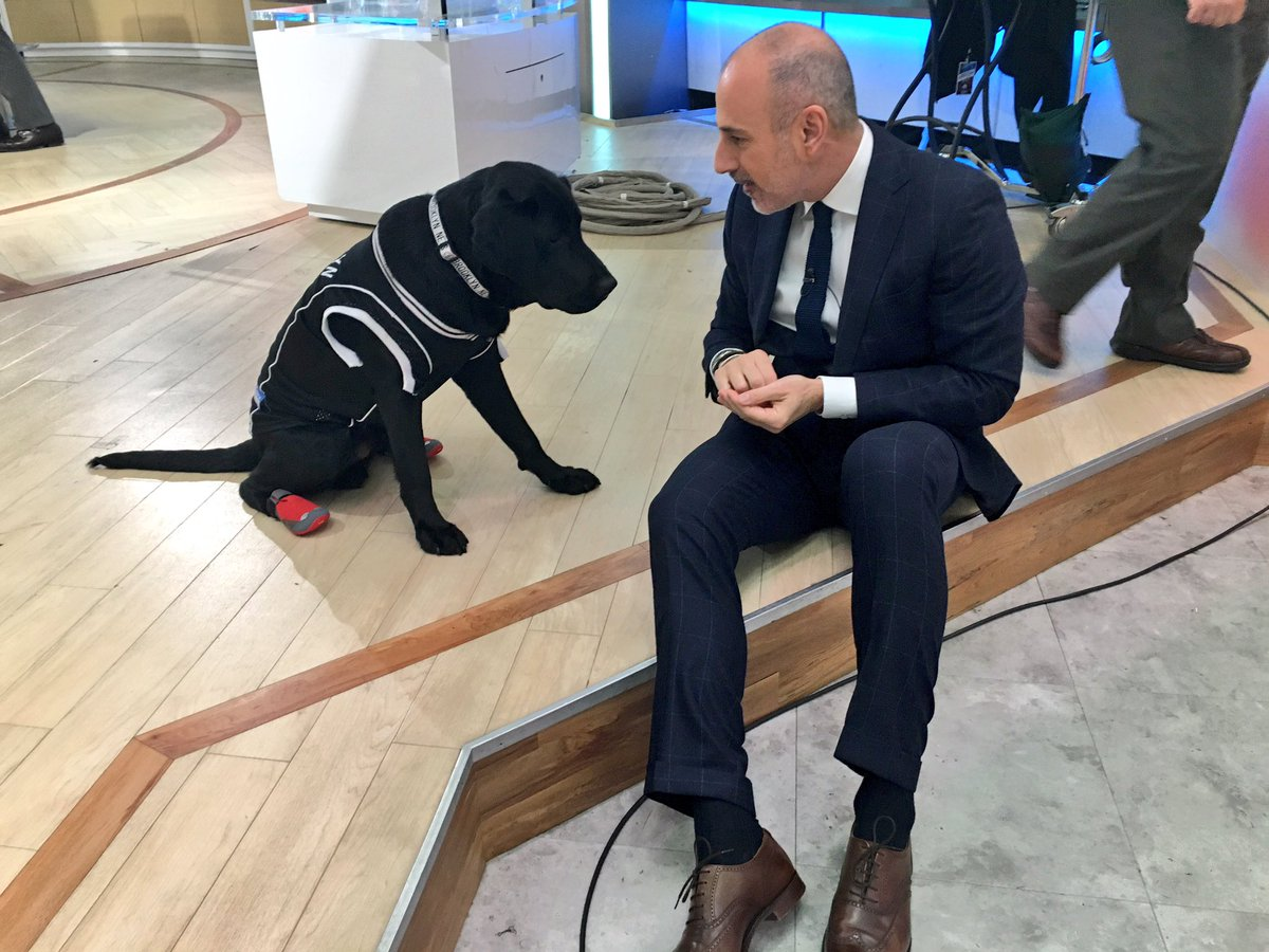 Put me in, coach! @TODAYPuppy shows off his basketball skills coming up on @TODAYshow 🏀 #OrangeRoom view