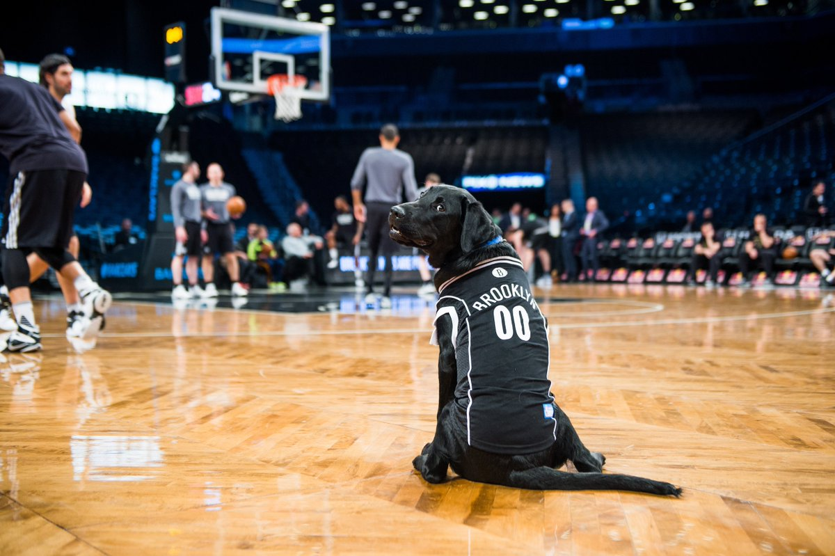 Had a paw-some time at my first @nba game. Go @BrooklynNets! #TODAYPuppy