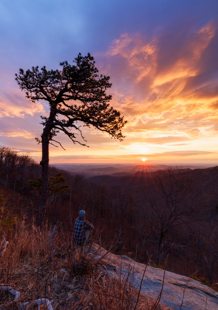 """Winter sunrise featuring Shenandoah's own """"Gone with the Wind"""" tree. #ThursdayThoughts #Sunrise #FindYourPark https://t.co/q9w25rFYNM"""