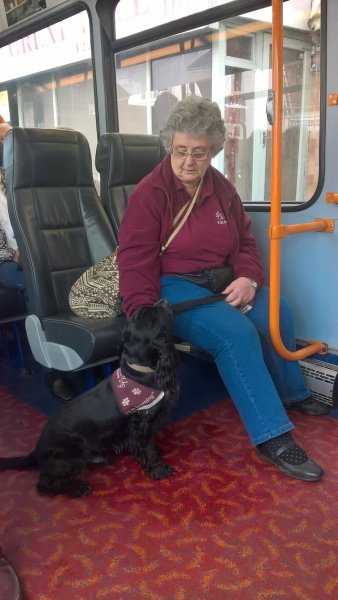 Hearing Dog Harlow is doing an excellent job at keeping his cool on the bus!