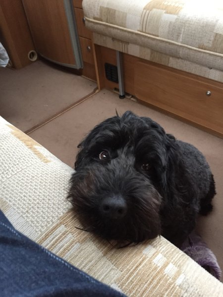 Just a pic of hearing dog puppy Otis popping up to say hello :)