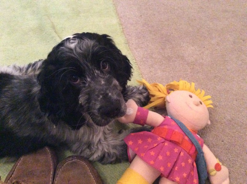 Hearing dog pup Olaf has found himself a new friend!