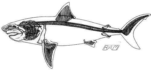 ロマレオサウルス