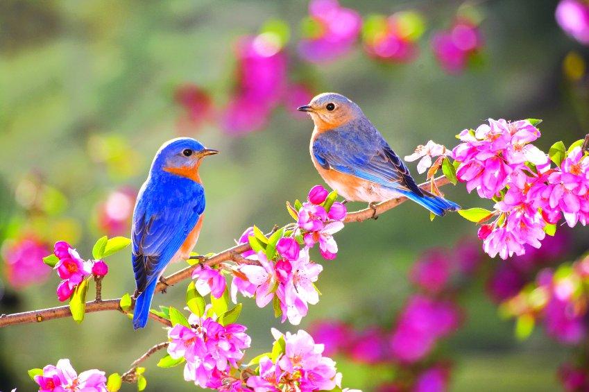 Картинки с цветами и птицами, для