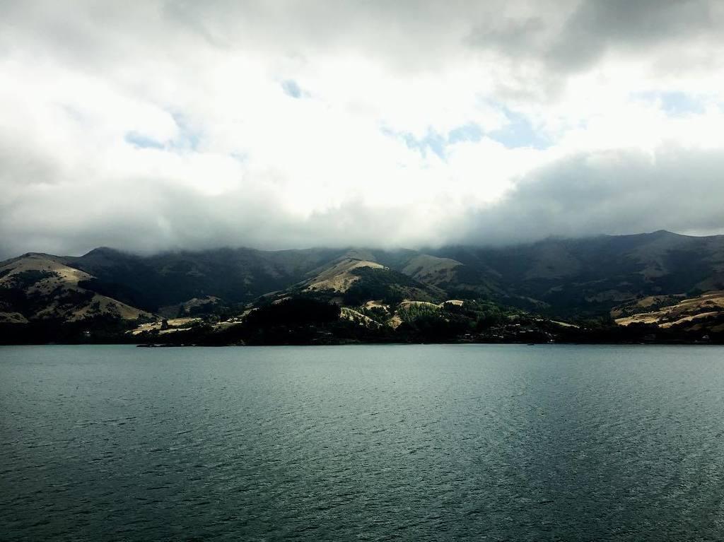 Stunning nature... #msartania #twiolinsontour #oceanlove #stunningnature #akaroa #newzealandpic.twitter.com/w54fNcOYYf
