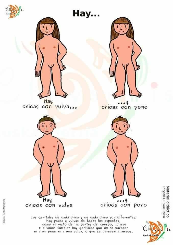 todas las partes del pene