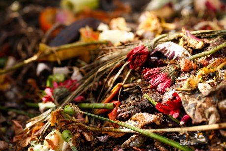 7 Basic Composting Secrets for Better Results