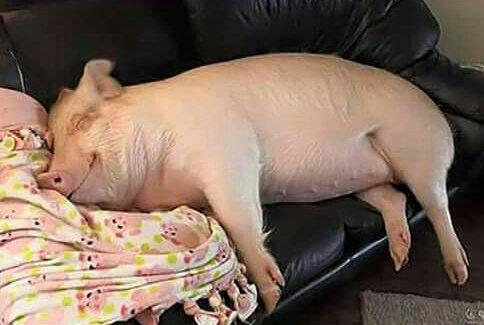 terminas de comer y pinta siesta