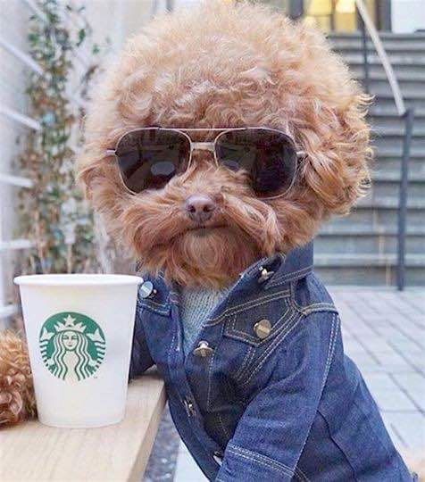 RT @chrisporkerwebb: I saw Jeff Lynne out having a coffee earlier https://t.co/gXir5pOxz8