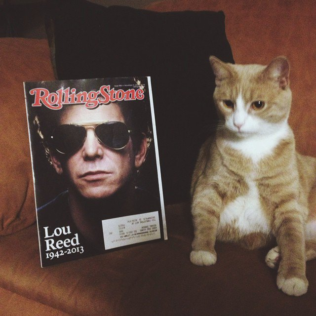 Happy Birthday Lou Reed. My cat is named after you, and he has lived up to expectations