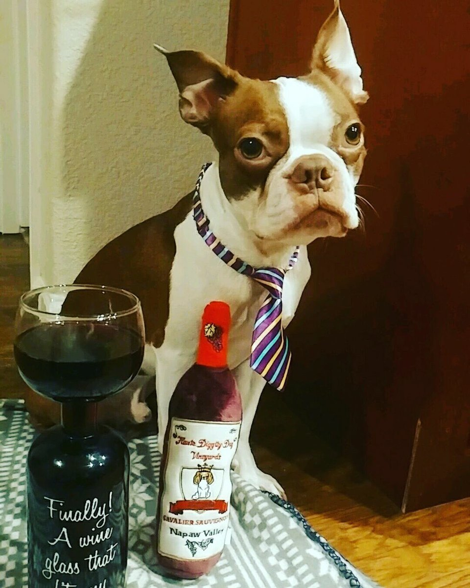 Our Posh employee Leo is enjoying his wine for National Wine Day!  How did you celebrate?