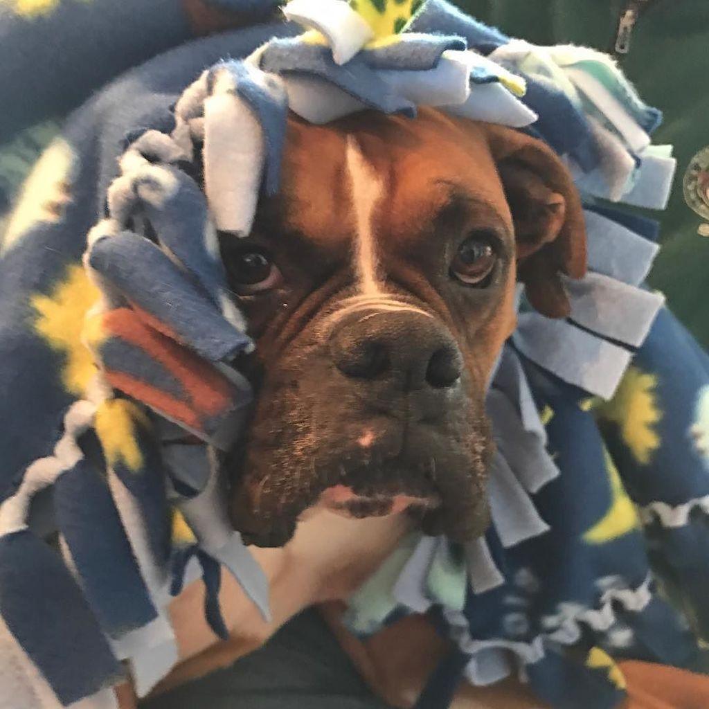 Debout là-dedans ! C&#39;est dimanche  #Sunday  #SundayMorning  #DogsOfTwitter via @Adopt_A_Boxer<br>http://pic.twitter.com/HpkaMz90Nz