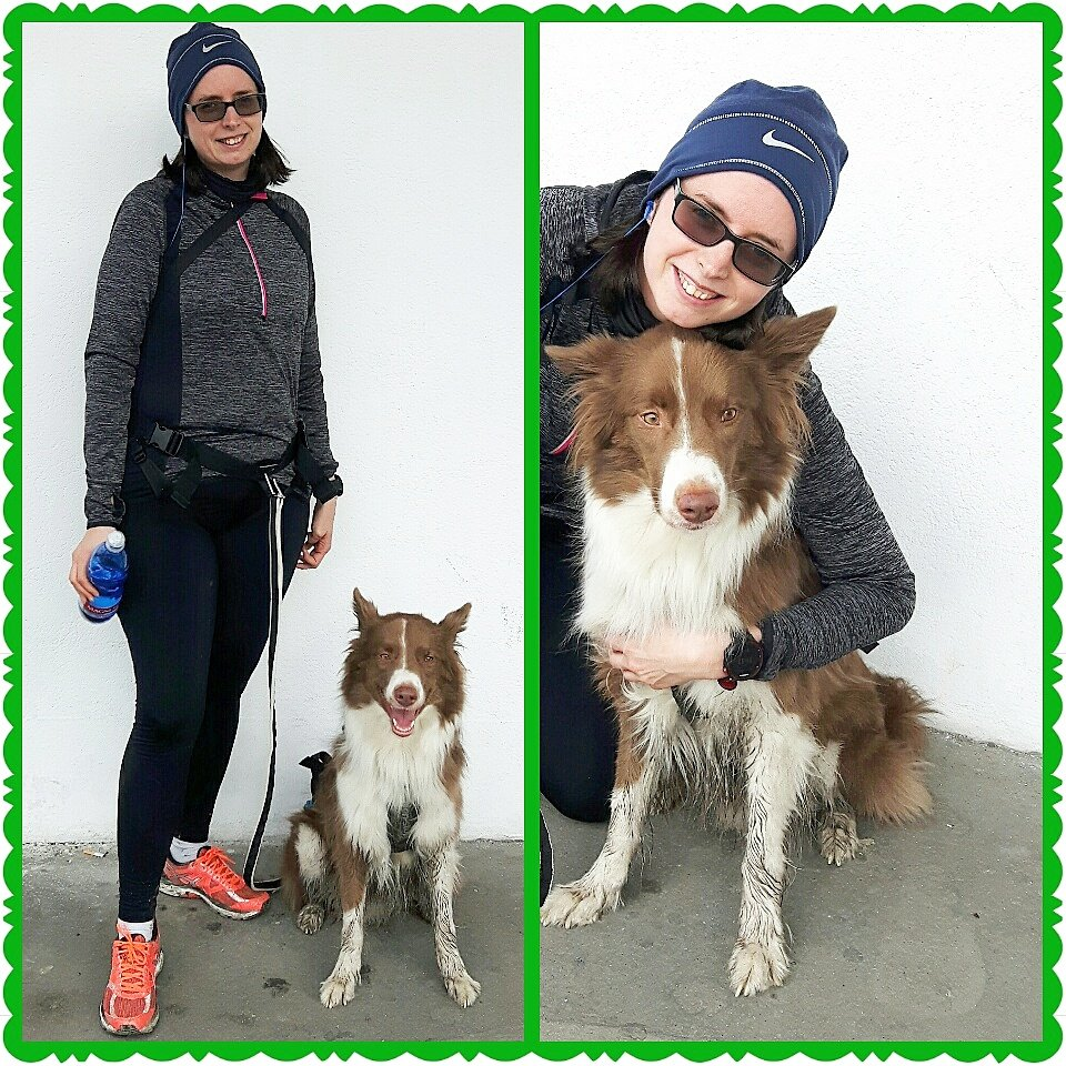 Nice run together with my great Run-buddy &quot;Phönix&quot; ... we had much fun :) #Canicross #running #laufen #Hundesport #Laufsport #runrunrun<br>http://pic.twitter.com/HgnYpeQeAQ