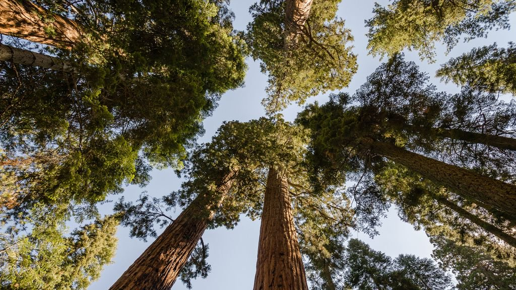 Sierra forest managers go up against apocalyptic threats from #climate change | @YaleE360  http:// e360.yale.edu/features/in-th e-sierras-new-thinking-on-protecting-forests-under-stress &nbsp; …  #divest <br>http://pic.twitter.com/VkDBzyA8Eb