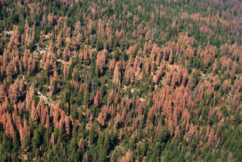 In the Sierras, New Approaches to Protecting #Forests Under Stress -  http:// ow.ly/XH103096Xvh  &nbsp;   via @YaleE360<br>http://pic.twitter.com/2YAfTYT2eJ