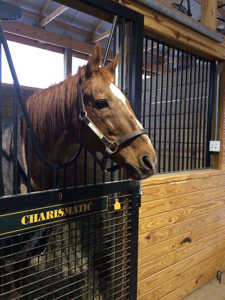 Saturday evening, CHARISMATIC had his eye firmly on a bucket of carrot...