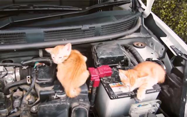 忘れないで 猫のためにボンネットを叩く『猫バンバン』 ⇒https://t.co/Pj6wnYXHwz  暖かくなってきて、つい忘れてしまい...