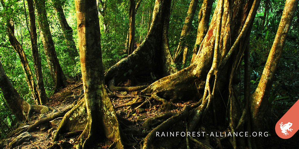 #Forests absorb 2.6 billion tons of CO2 per year. Help us #KeepForestsStanding:  http:// bit.ly/Support_RA  &nbsp;  <br>http://pic.twitter.com/slQARGKPa2